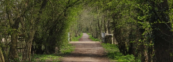 East Sussex bridleway