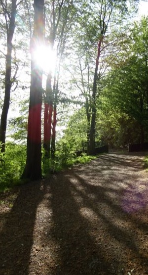 Linacre Reservoir cycle trail
